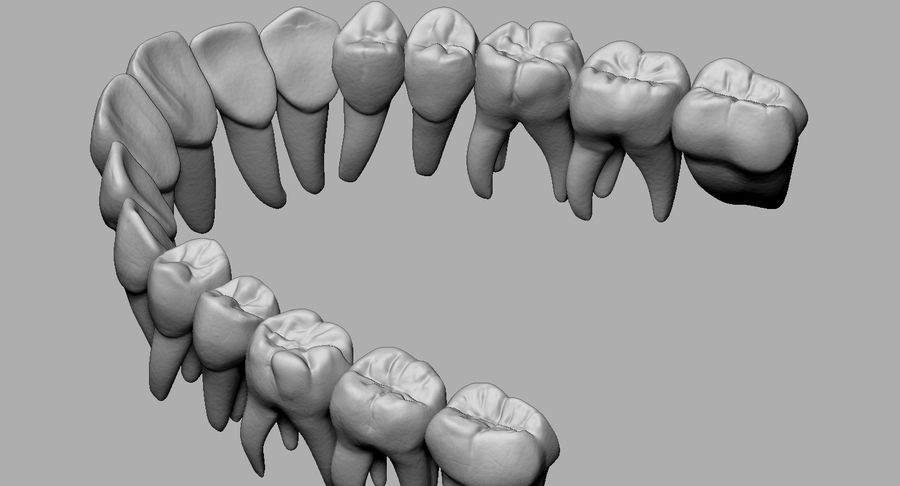Mouth teeth gum realistic dental royalty-free 3d model - Preview no. 29