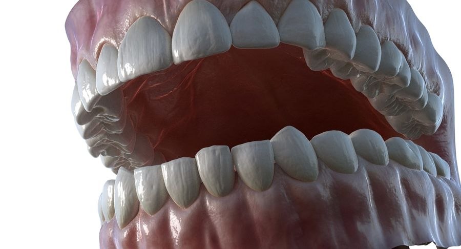 Mouth teeth gum realistic dental royalty-free 3d model - Preview no. 9