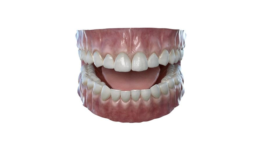 Mouth teeth gum realistic dental royalty-free 3d model - Preview no. 7