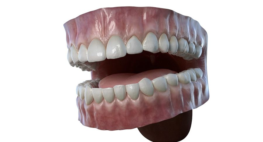 Mouth teeth gum realistic dental royalty-free 3d model - Preview no. 3