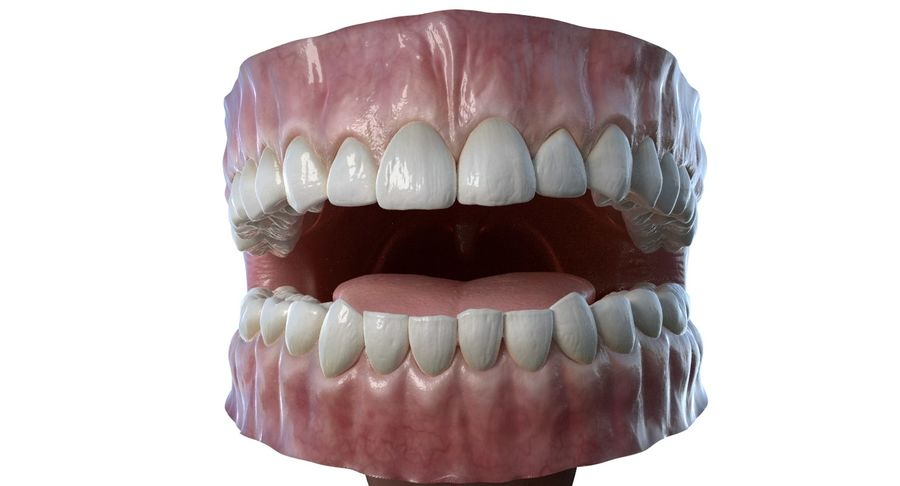 Mouth teeth gum realistic dental royalty-free 3d model - Preview no. 2