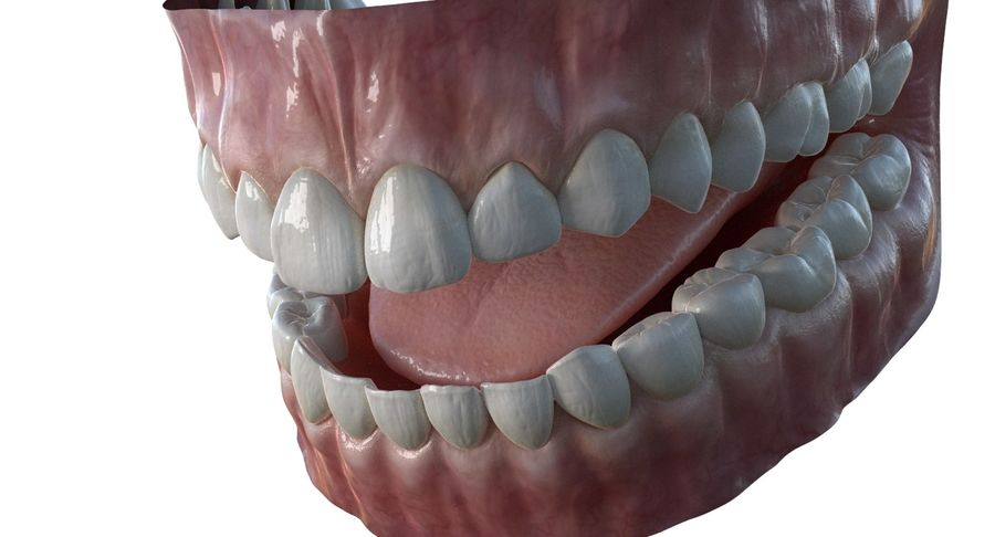 Mouth teeth gum realistic dental royalty-free 3d model - Preview no. 6