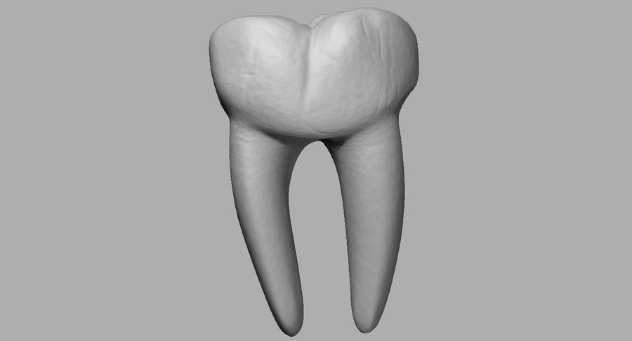 Mouth teeth gum realistic dental royalty-free 3d model - Preview no. 27