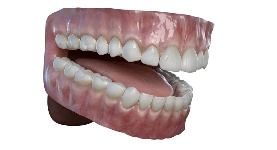 Mouth teeth gum realistic dental royalty-free 3d model - Preview no. 4