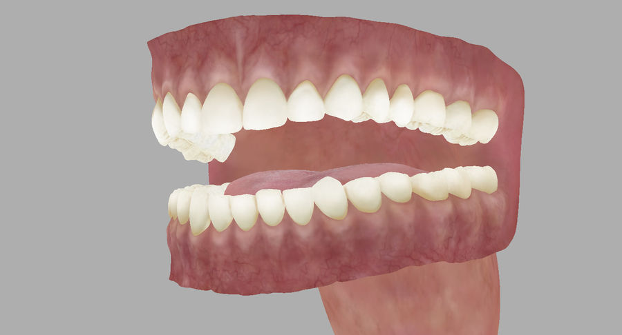 Mouth teeth gum realistic dental royalty-free 3d model - Preview no. 25