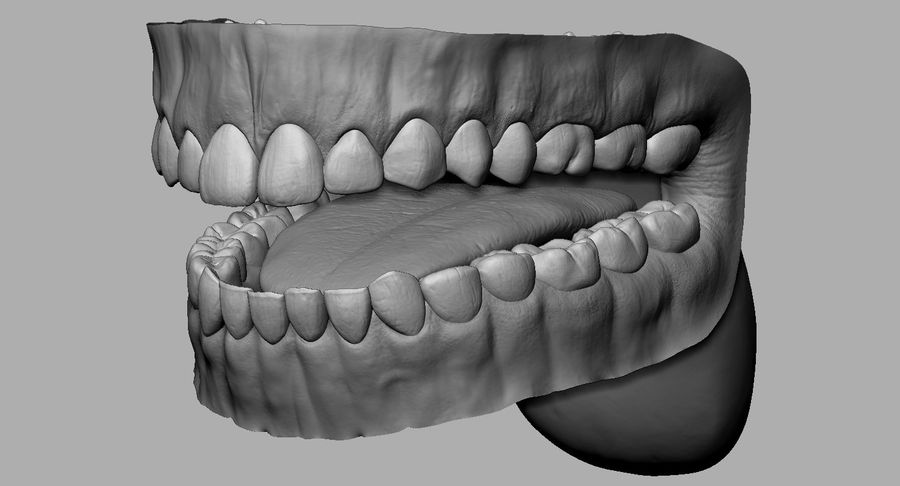 Mouth teeth gum realistic dental royalty-free 3d model - Preview no. 11