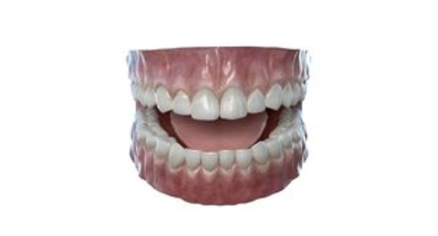 Mouth teeth gum realistic dental royalty-free 3d model - Preview no. 1