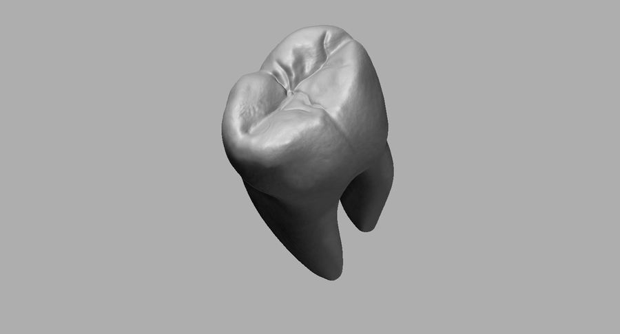 Mouth teeth gum realistic dental royalty-free 3d model - Preview no. 28