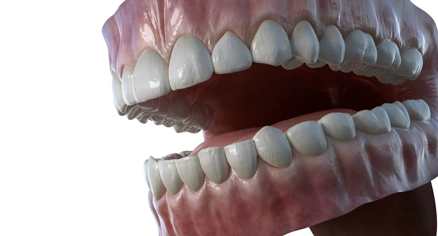 Mouth teeth gum realistic dental royalty-free 3d model - Preview no. 5