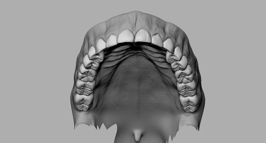 Mouth teeth gum realistic dental royalty-free 3d model - Preview no. 17