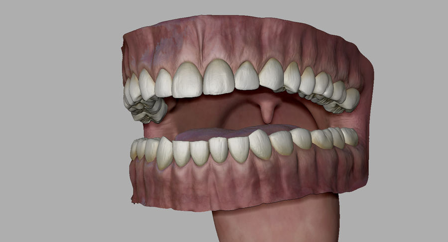 Mouth teeth gum realistic dental royalty-free 3d model - Preview no. 22