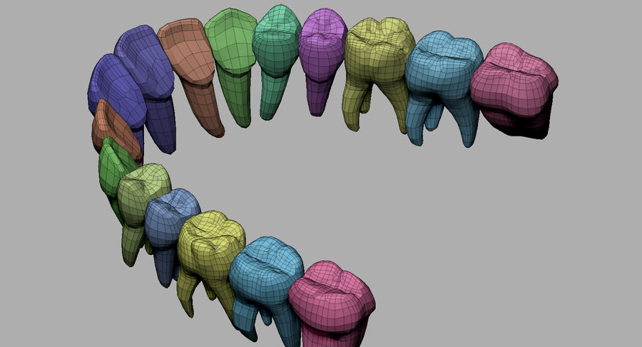Mouth teeth gum realistic dental royalty-free 3d model - Preview no. 32
