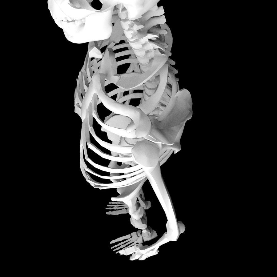 Ludzki szkielet Mdl royalty-free 3d model - Preview no. 5