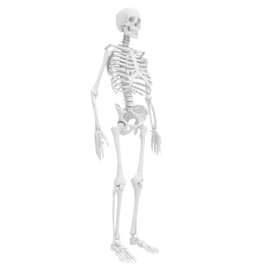 Ludzki szkielet Mdl royalty-free 3d model - Preview no. 1