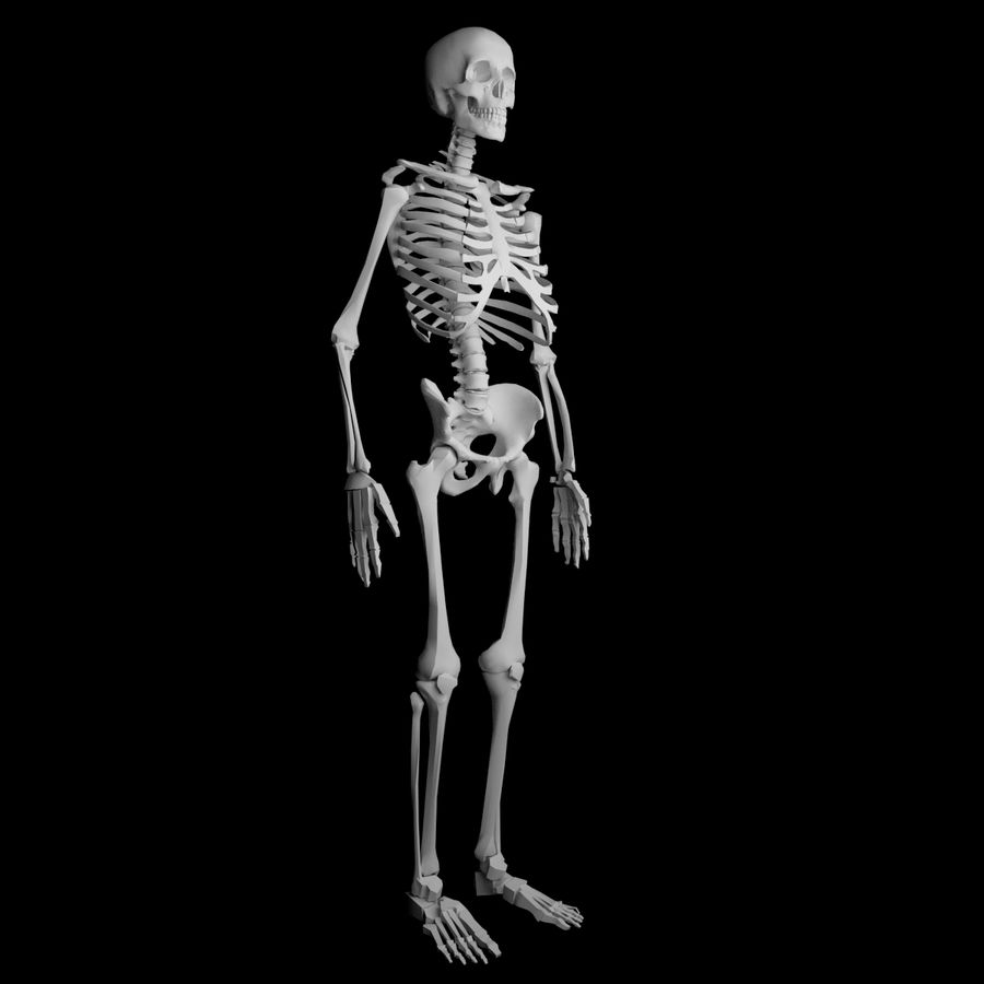Ludzki szkielet Mdl royalty-free 3d model - Preview no. 2