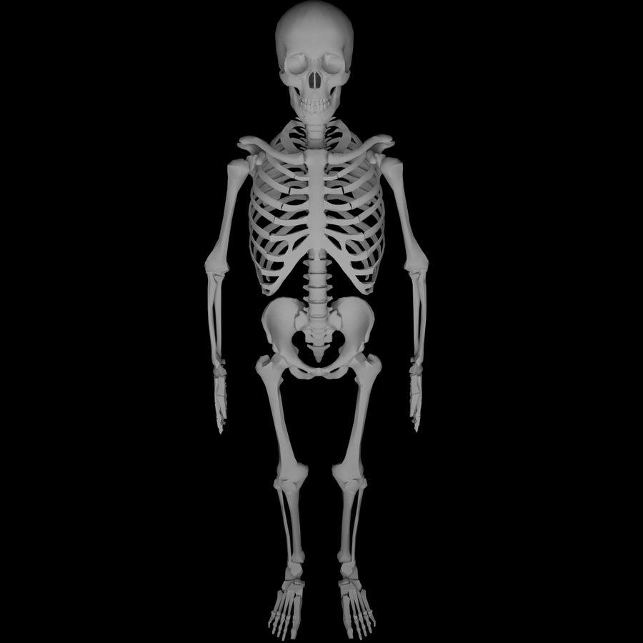 Ludzki szkielet Mdl royalty-free 3d model - Preview no. 6