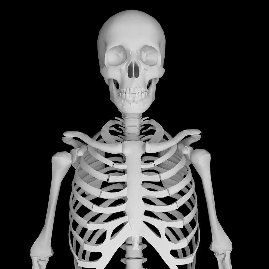 Ludzki szkielet Mdl royalty-free 3d model - Preview no. 3