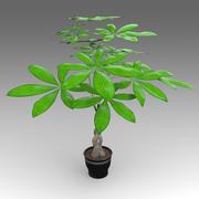 파치 라 아쿠아 티카 Plant_008 3d model