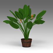 Strelitzia Plant_022 3d model