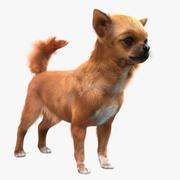 Chihuahua med päls 3d model