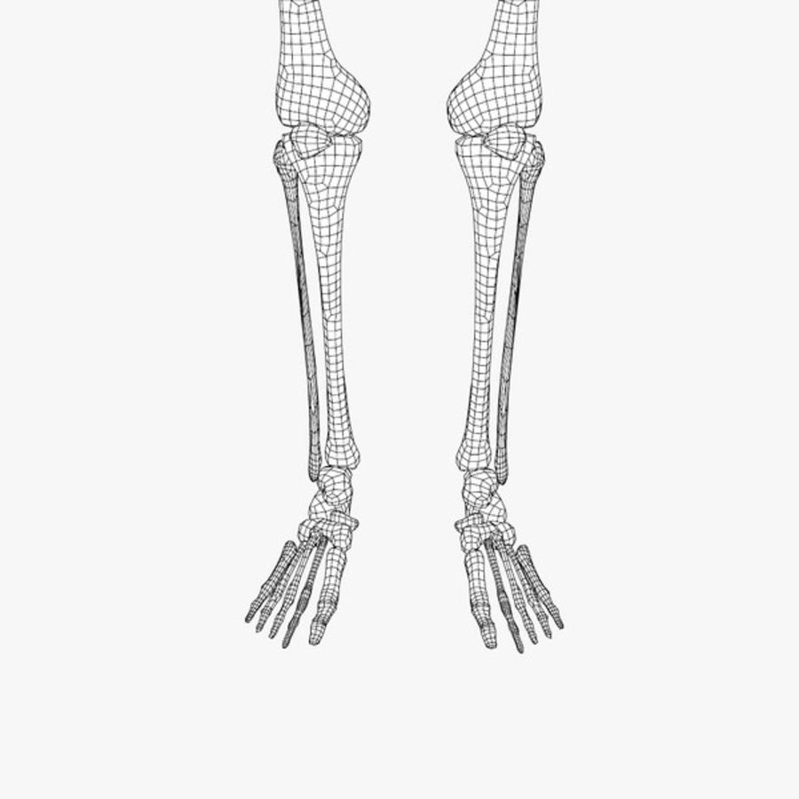 Human Skeleton royalty-free 3d model - Preview no. 9