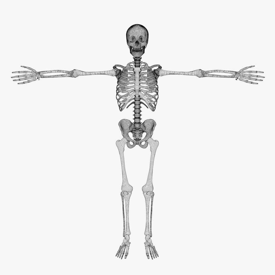 Human Skeleton royalty-free 3d model - Preview no. 8