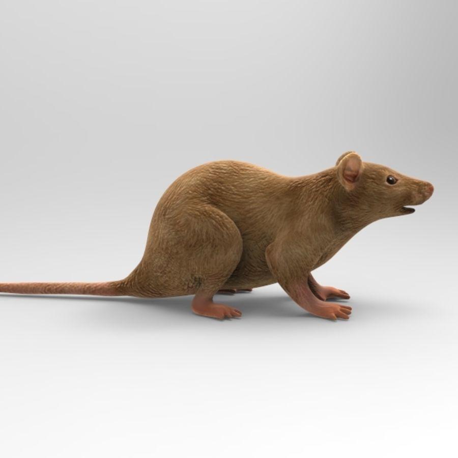 Rat Mouse 3D Model $10 - .oth .obj .ma - Free3D