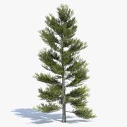 Árbol de pino Low Poly 2 modelo 3d