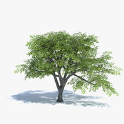 Low Poly Oak Tree 3d model