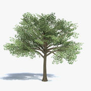 Low Poly Medium Size Tree 3d model