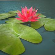 lilia water_pink_v3 3d model