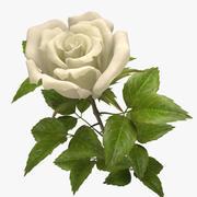 biała róża 3d model