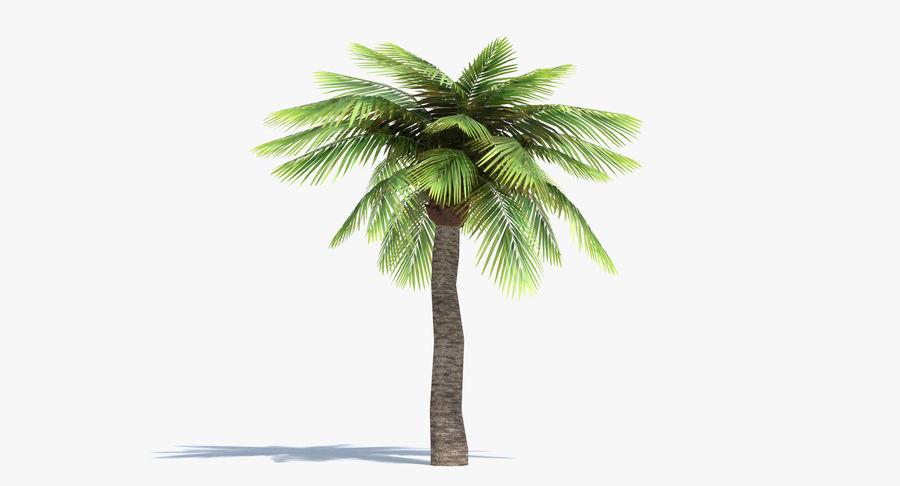 Palma Low Poly royalty-free 3d model - Preview no. 2