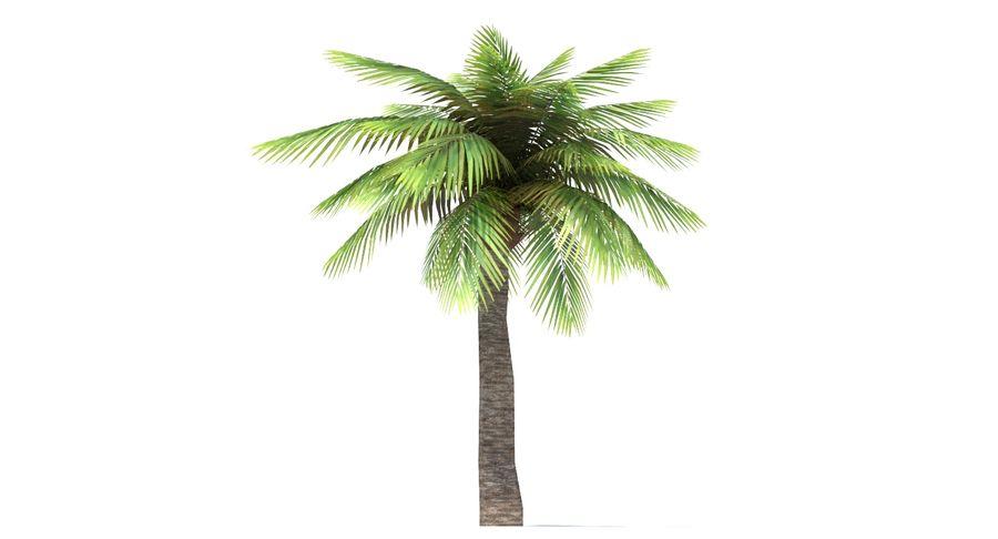 Palma Low Poly royalty-free 3d model - Preview no. 6