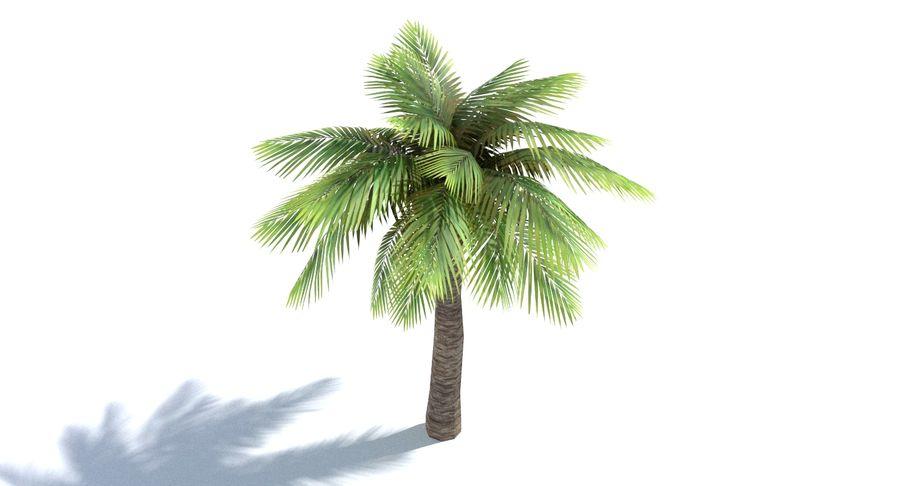 Palma Low Poly royalty-free 3d model - Preview no. 5