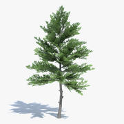 Låg Poly Pine Tree 3d model