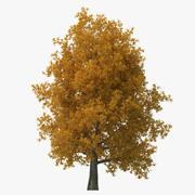 Peuplier jaune vieil arbre automne 3d model
