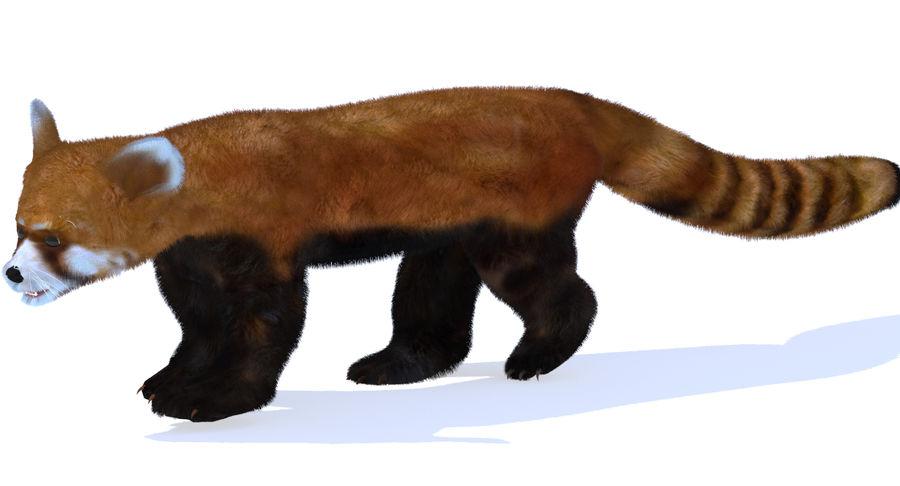 Red Panda (Lesser Panda) Fur royalty-free 3d model - Preview no. 7