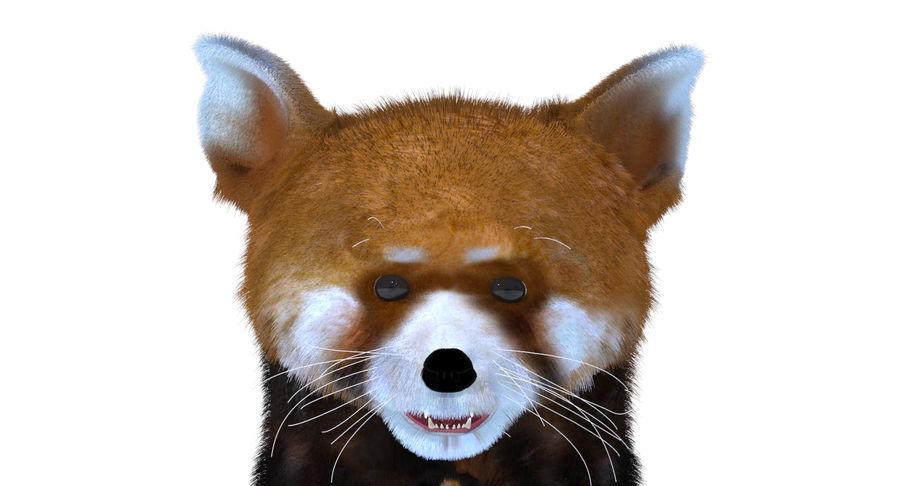 Red Panda (Lesser Panda) Fur royalty-free 3d model - Preview no. 8