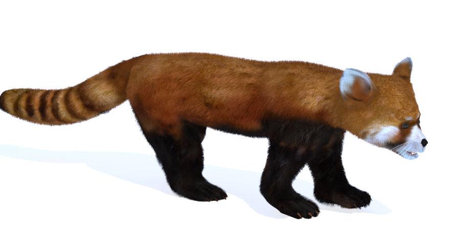 Red Panda (Lesser Panda) Fur royalty-free 3d model - Preview no. 4