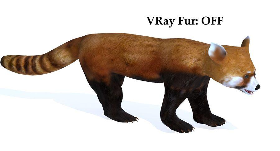 Red Panda (Lesser Panda) Fur royalty-free 3d model - Preview no. 5