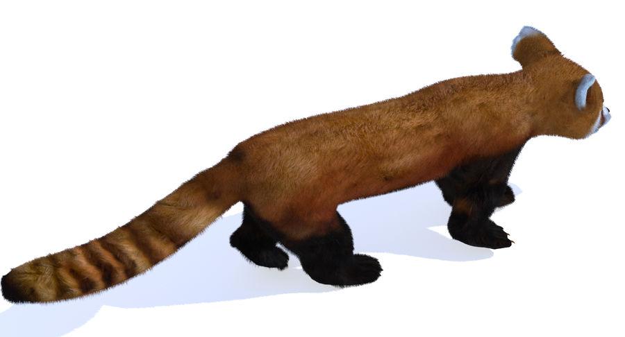 Red Panda (Lesser Panda) Fur royalty-free 3d model - Preview no. 6