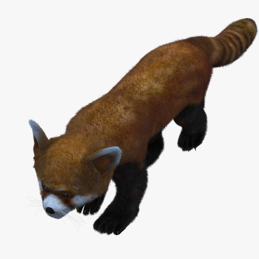 Red Panda (Lesser Panda) Fur royalty-free 3d model - Preview no. 1