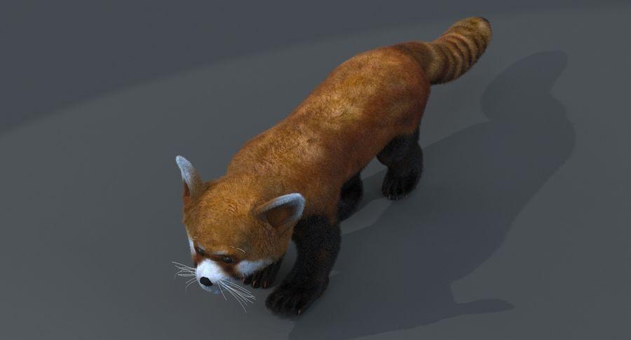 Red Panda (Lesser Panda) Fur royalty-free 3d model - Preview no. 3