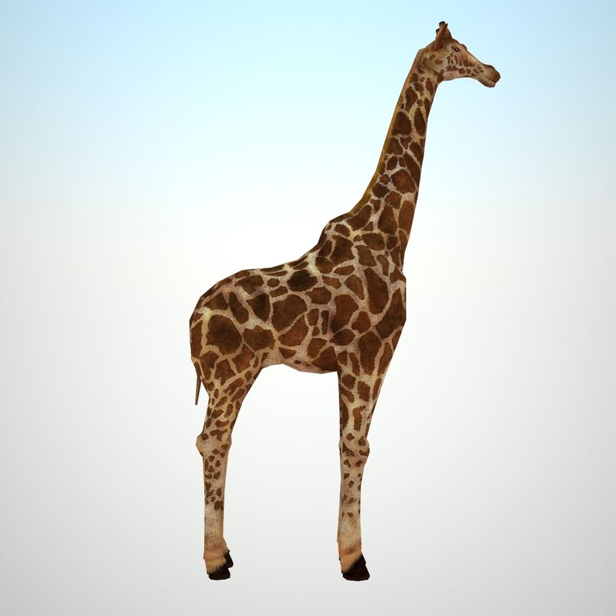 Safari animals collection royalty-free 3d model - Preview no. 10