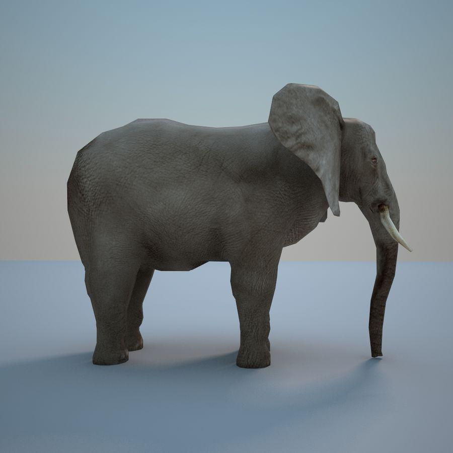 Safari djur samling royalty-free 3d model - Preview no. 18