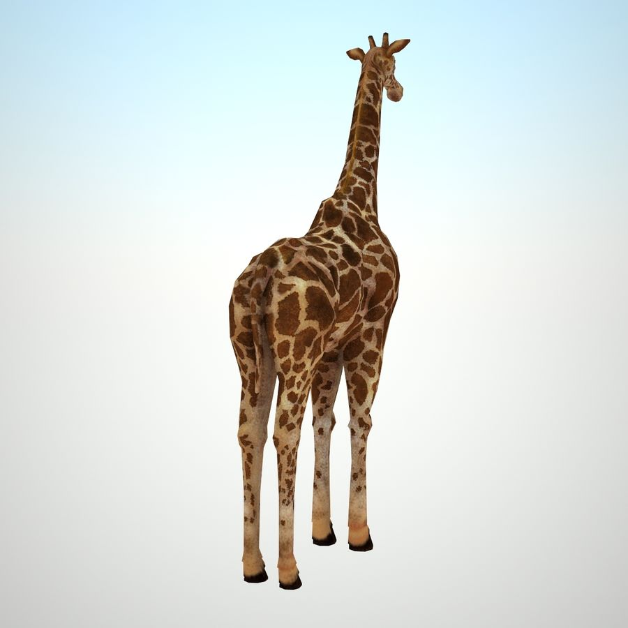 Safari animals collection royalty-free 3d model - Preview no. 11