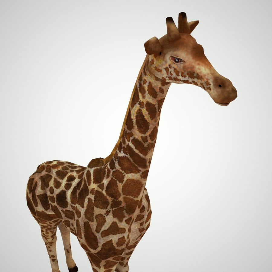 Safari animals collection royalty-free 3d model - Preview no. 14