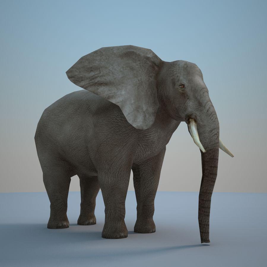 Safari djur samling royalty-free 3d model - Preview no. 22