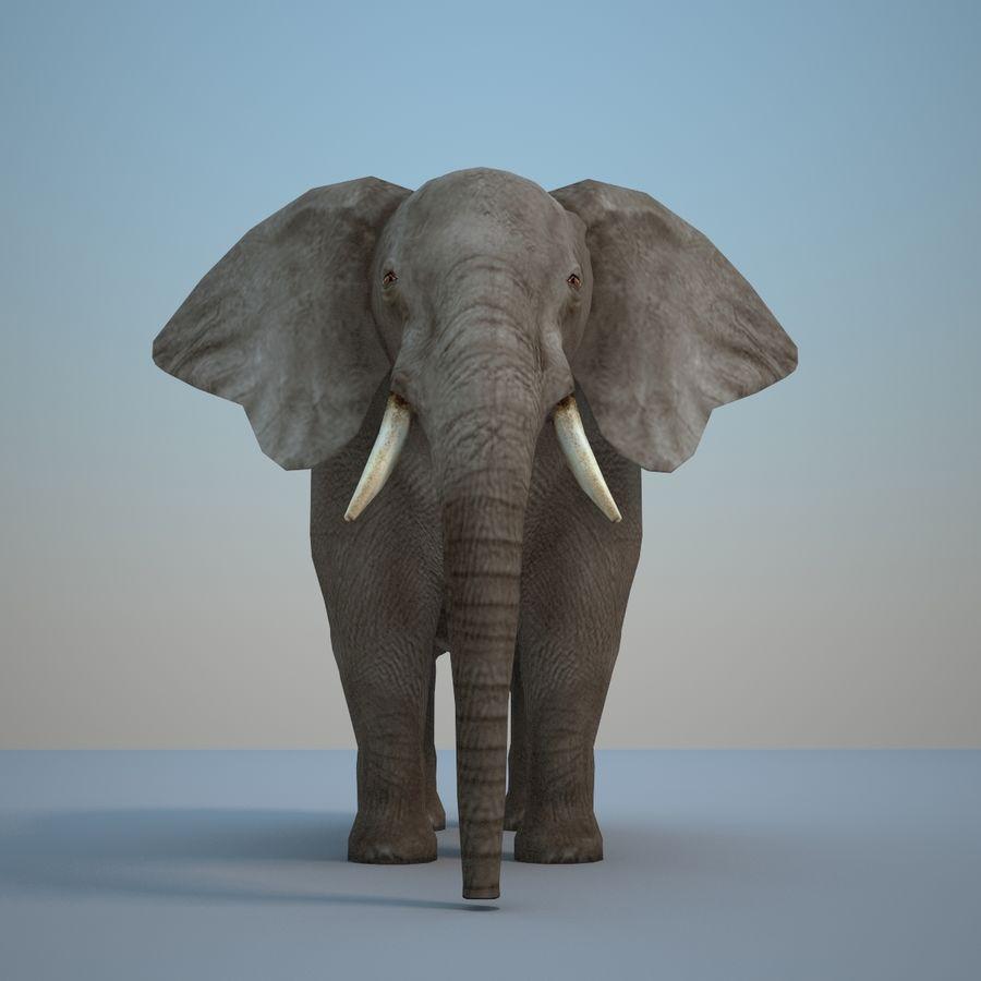 Safari djur samling royalty-free 3d model - Preview no. 21